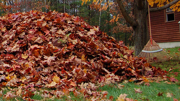 Leaf Removal Tips Should I Mulch Or Remove