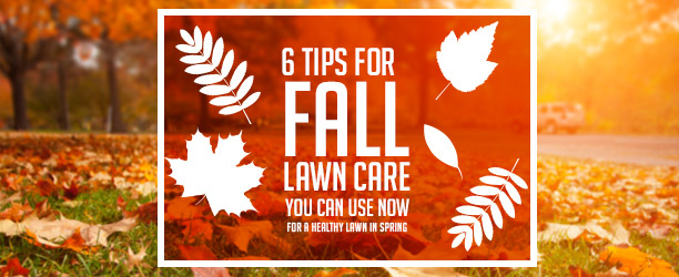 6 Fall Lawn Maintenance Tips You Can Use Now Main Image