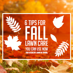 6 Fall Lawn Maintenance Tips You Can Use Now Thumbnail
