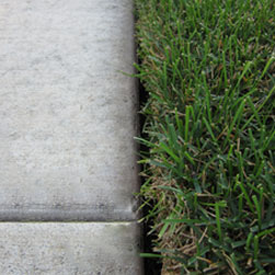 How Often Should My Lawn Be Edged? Thumbnail